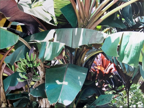 oil painting of red banana plant