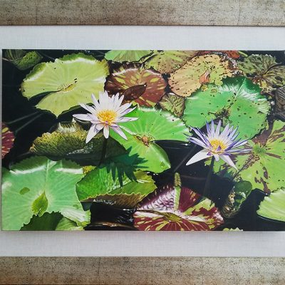 Oil painting of Water Lilies by Thomas Boone