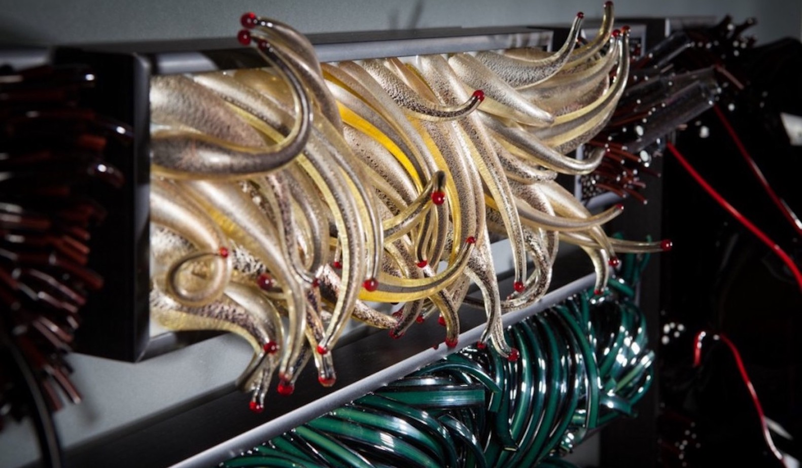 Glass sculpture by shayna leib at Habatat Galleries FL